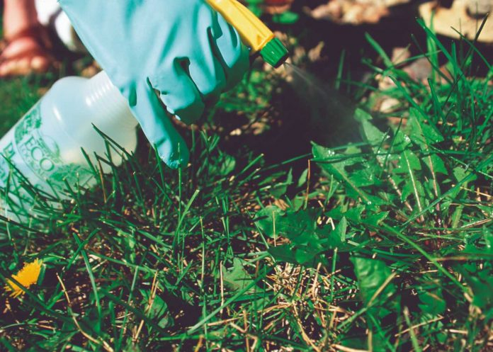 how to get rid of fleas in the yard