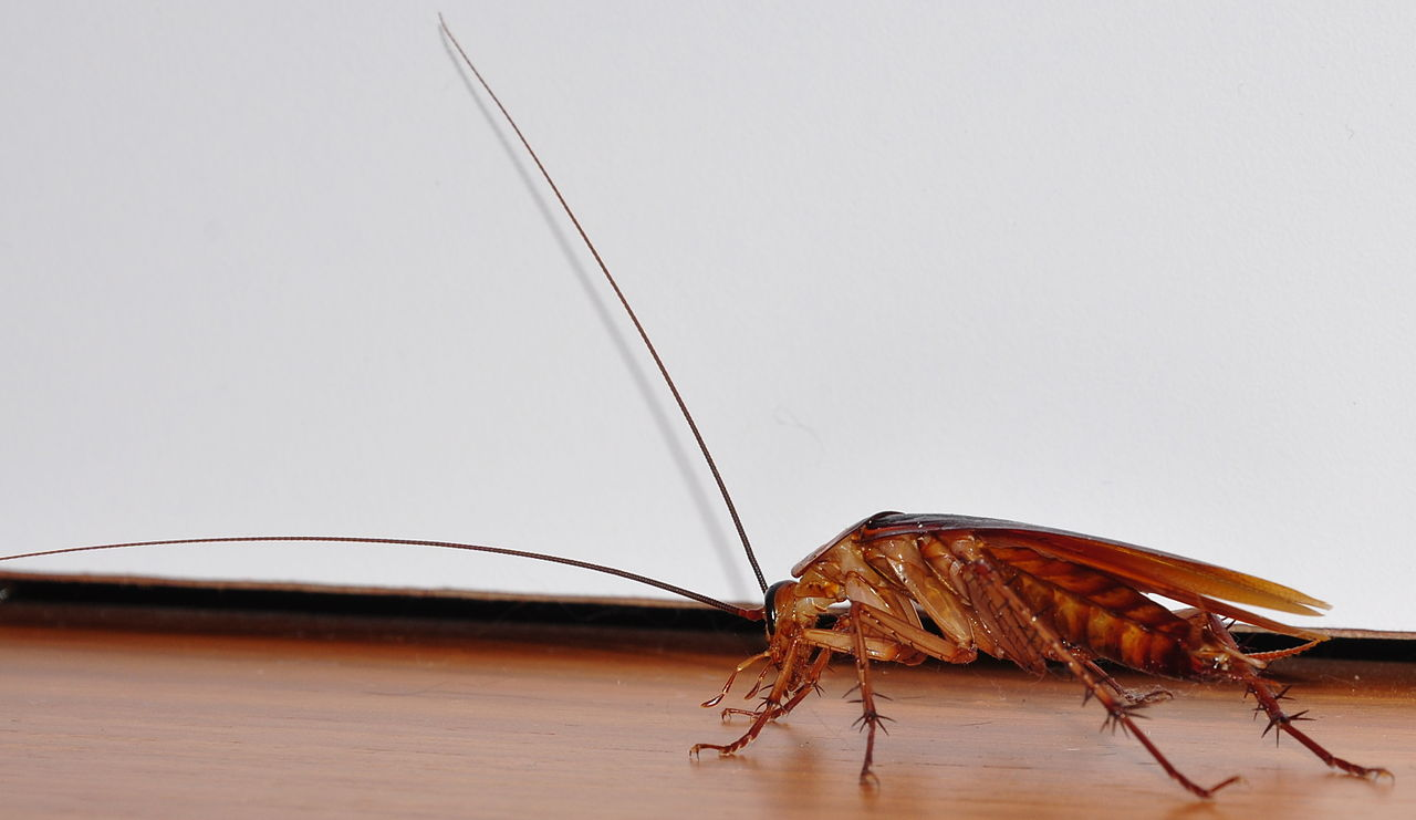 How To Get Rid Of Roaches Without An Exterminator Spadone Home